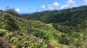 The 5-Mile Forest Trail In Hawaii That's Just Begging To Be Visited