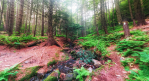 Hike This Ancient Forest In Massachusetts That's Home To 500-Year-Old Trees