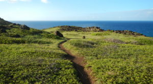 It's Practically A Criminal Offense Not To Check Out This Easy Coastal Hike In Hawaii