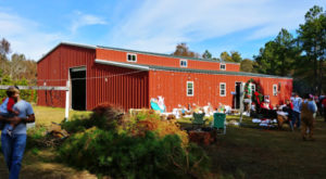 This Christmas Farm In South Carolina Is An Annual Must-Do