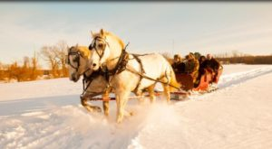 Take An Entrancing Horse-Drawn Sleigh Ride Through The Connecticut Countryside This Winter