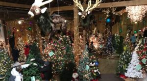 The Christmas Tree Barn In Maryland That Will Light Up Your Holiday Season
