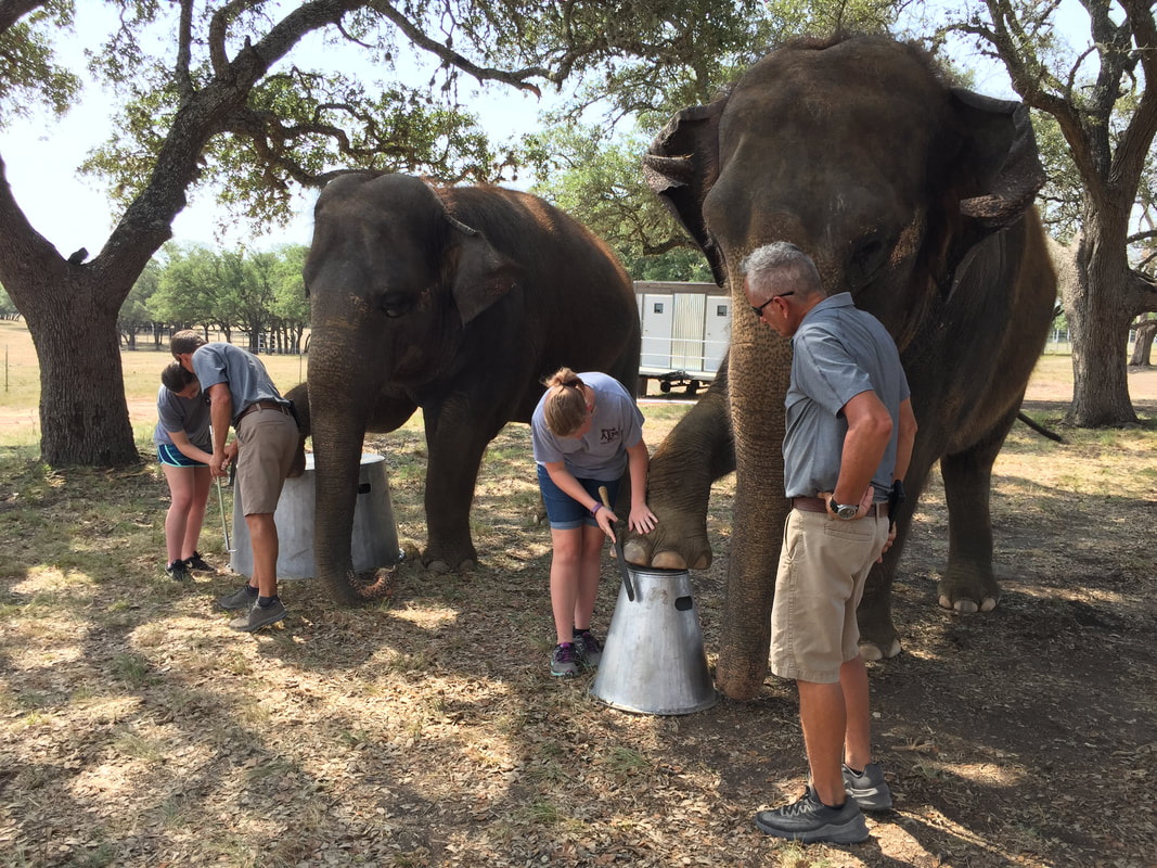 Meet Endangered Elephants At This Animal Sanctuary In Texas