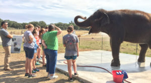 Most People Don't Know You Can Meet Endangered Elephants At This Unique Preserve In Texas