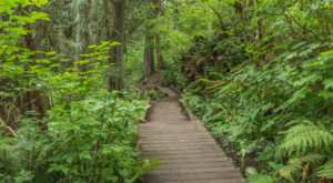 This Stunning Trail Shows Off 4 of Washington's Finest Natural Wonders