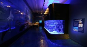 The Ocean Discovery Center In Hawaii That Tops Our Hawaii Travel List This Year