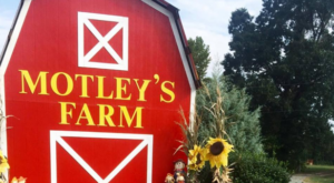 A Visit To This Arkansas Christmas Farm Is Sure To Get You Into The Holiday Spirit