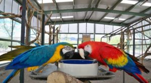 Plan Your Visit To This Amazing Tropical Parrot Sanctuary In Arizona As Soon As You Can