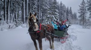 Embark On This Enchanting Sleigh Ride In Nevada For Unforgettable Holiday Memories