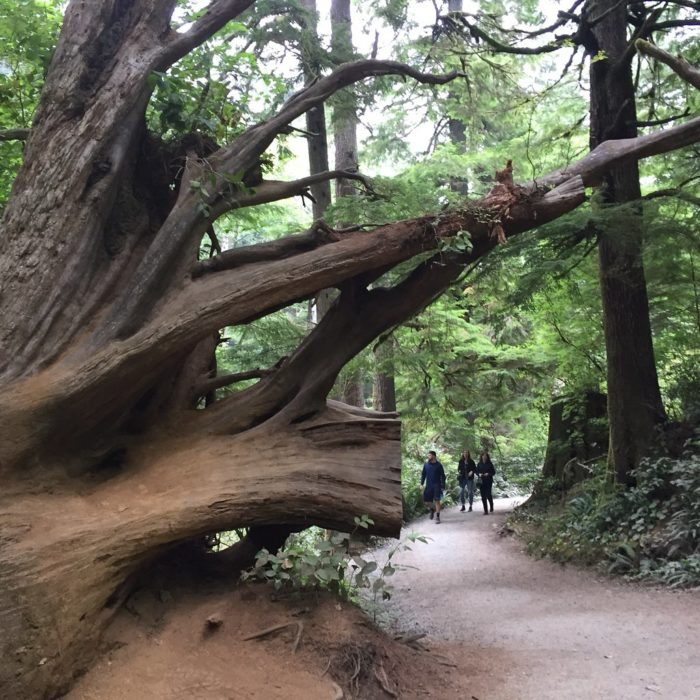 Oregon's Oswald West State Park Features An Old-Growth Forest