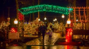 The Magical Christmas Tree Forest In New York That Only Gets Better Year After Year