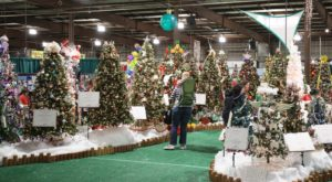 This Christmas Tree Festival In Maryland Is Like Walking In A Winter Wonderland
