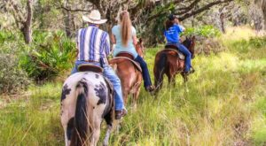 This Horse Trail Ride Will Take You Through Some Of Florida's Best Nature Trails