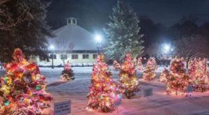 This Christmas Tree Trail In Rhode Island Is Like Walking In A Winter Wonderland