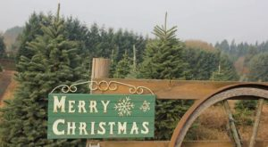 12 Magical Christmas Tree Farms In Oregon That Are Fun For The Whole Family