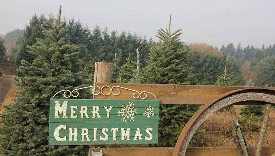 Christmas Tree Farms San Diego