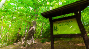 Hike This Ancient Forest In Wisconsin That's Home To 300-Year-Old Trees