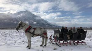 This 50-Minute Alaska Sleigh Ride Takes You Through A Winter Wonderland
