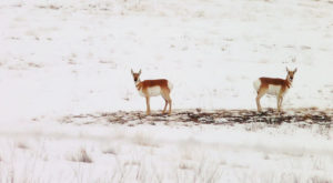 This Colorado Winter Wildlife Hike Will Spoil You For Life