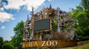 This Zoo In New York Has Animals That You May Have Never Seen In Person Before