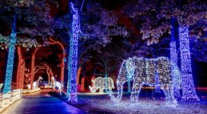 This Detroit Zoo Has One Of The Most Spectacular Christmas Light Displays You've Ever Seen