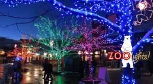This Utah Zoo Has One Of The Most Spectacular Christmas Light Displays You've Ever Seen