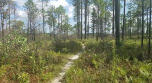 The Unrivaled Forest Hike In Louisiana Everyone Should Take At Least Once