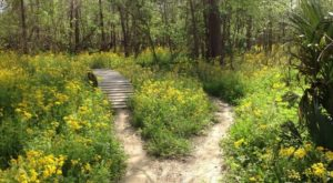 The Peaceful Nature Trail Near New Orleans You Can't Help But Love