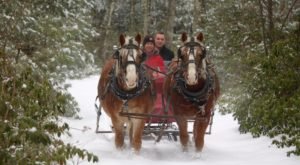 This 30-Minute Massachusetts Sleigh Ride Takes You Through A Winter Wonderland