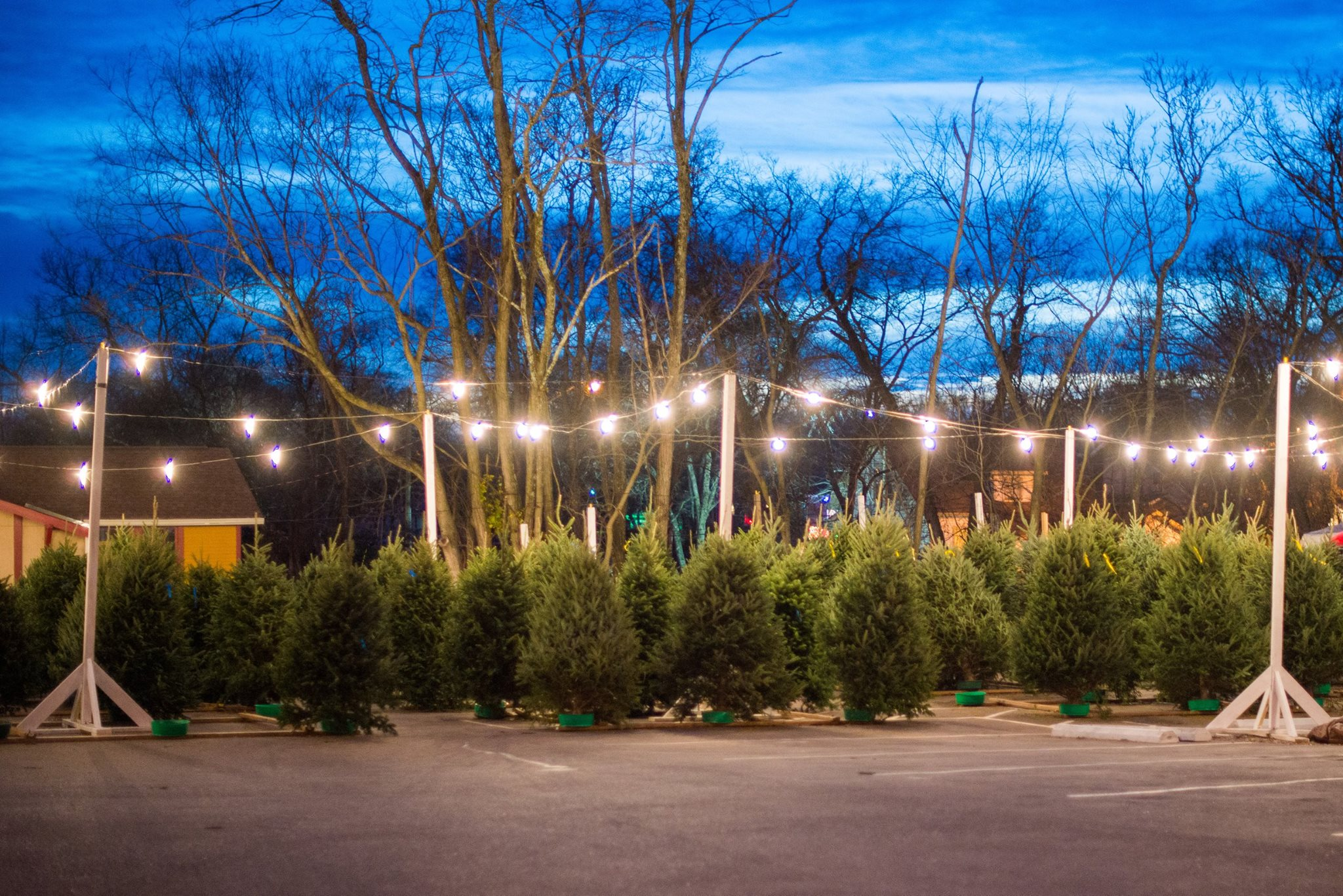 Christmas Tree Farms In Northern Virginia