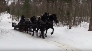 This 60-Minute New Hampshire Sleigh Ride Takes You Through A Winter Wonderland