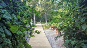 This Massachusetts Park Has A Dreamy Boardwalk That You'll Want To Explore