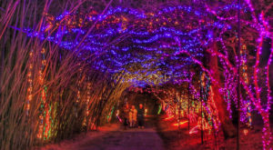 Nothing Beats A Stroll Through This Alabama Garden At Christmastime