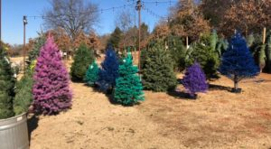 The Christmas Tree Farm In Oklahoma That's Unlike Any Other You've Ever Been To