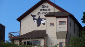 Most Washingtonians Have Never Heard Of This Fascinating Whale Museum