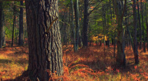 Hike This Ancient Forest In New Hampshire That's Home To 200-Year-Old Trees