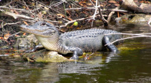 These 5 Out-Of-Place Creatures Have Been Spotted In Tennessee And You'll Want To Steer Clear