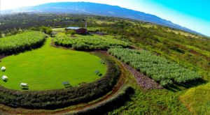 The Distillery Farm Tour In Hawaii That Is Unlike Anything In The Entire World