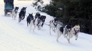 This Delightful Wisconsin Winter Festival Is For The Dogs – Literally