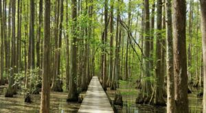 You Can Start Your Hike Anywhere Along The 5 Longest Trails In Louisiana