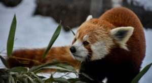 This Zoo In Buffalo Has Animals That You May Have Never Seen In Person Before
