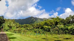 Visit One Of The Country's Only Cacao Farms On This Sweet Tour In Hawaii