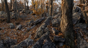 The Story Behind Virginia's Haunted Forest Will Chill You To The Bone