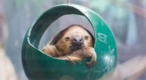 You Can Enjoy Breakfast With Sloths At This Massachusetts Zoo
