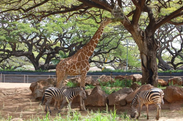 The Honolulu Zoo Has Animals That You May Have Never Seen In Person Before