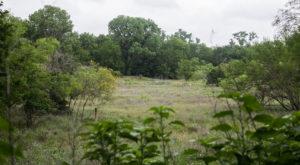 The Hidden Park That Will Make You Feel Like You've Discovered Austin's Best Kept Secret