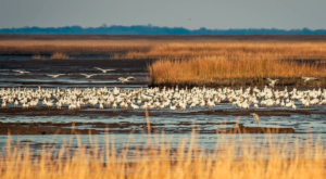 Delaware's Coastal Marshes Hiding In This Incredible Wildlife Refuge Are Like Something From A Dream