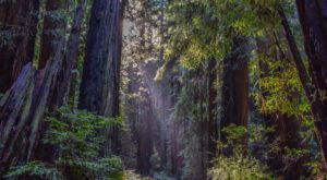 This Ancient American Redwood Forest Is Opening To The Public For The First Time Ever