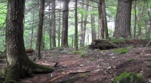Hike This Ancient Forest In Connecticut That's Home To 200-Year-Old Trees