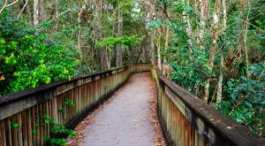 This Florida Park Has Endless Boardwalks And You'll Want To Explore Them All